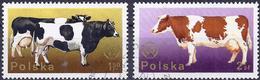 Poland 1975 - Mi 2380/81 - YT 2219/20 ( Cows ) - 1944-.... République