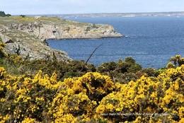 Belle Ile En Mer (56)- Pointe D'Arzic (Edition à Tirage Limité) - Belle Ile En Mer