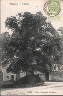 Rossignol - L'Orme (arbre Remarquable, Edit. Lallemand 1912) - Tintigny