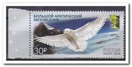 Rusland 2018, Postfris MNH, Birds, Owl - Nuevos