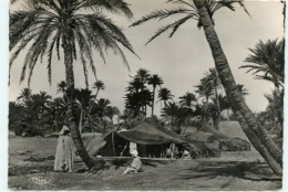 Tozeur, Oasis, Campement (scan Recto-verso) KEVREN0036 - Túnez
