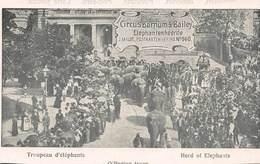 CPA Troupeau D' éléphants - CIRCUS BARNUM & BAILEY - Cirque