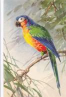 AS79 C. Klein - Parrot On A Branch - Klein, Catharina