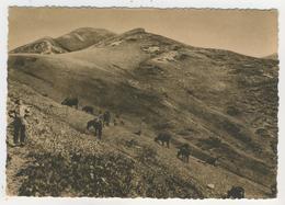 15 - Vacherie Au Col De Rombière - France