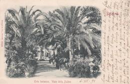 CARTOLINA - PALERMO - ORTO BOTANICO VIALE DELLE PALME - VIAGGIATA PER PISA ( FRANCOBOLLO ASPORTATO) - Palermo
