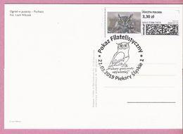 Poland 2019, PIEKARY Card, Owl, Hibou, Eule , Birds, Oiseau - Eagles & Birds Of Prey