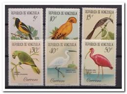 Venezuela 1961, Postfris MNH, Birds ( Tropical Gum ) - Venezuela