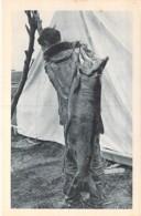 USA Etats-Unis ( AK Alaska ) Pêche ( Poisson ) : Saumon Royal / Fishing (Fish): Royal Salmon - CPA - Etats-Unis