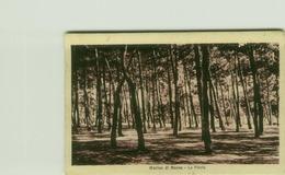 MARINA DI MASSA - LA PINETA - EDIZIONE ZANNONI - 1932 (3485) - Massa