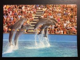 Delfin - Delphine