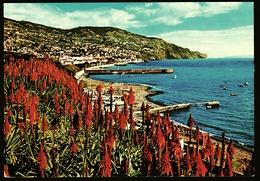 Funchal / Madeira  -  Ansichtskarte Ca. 1976   (11595 ) - Madeira