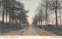 Dreef Doornboom Itegem - Heist-op-den-Berg