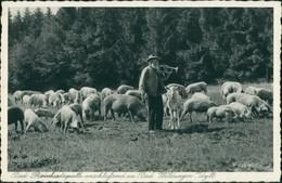 Ansichtskarte Bad Wildungen Schäfer Und Schafe Bad Reinhardsquelle 1935  - Bad Wildungen