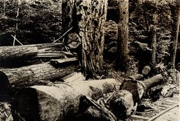 ARBE TREES FORESTRY  FORESTIERE  17*12CM Fonds Victor FORBIN 1864-1947 - Fotos