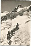 W4228 Jungfraubahn - Polarhunde Mit Rottalhorn / Viaggiata 1949 - BE Berne