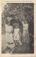 Caconda, Cueillette D'oranges - Angola