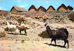 1 AK Peru * Lamas Und Typische Häuser In Der Region Puno * IRIS Karte * - Peru