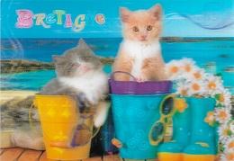 CHATS - 2 CHATS DANS DES SCEAUX - CARTE LENTICULAIRE - LA BRETAGNE EN 3 D - CPM - VIERGE - - Katten