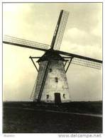 PETEGEM ~ Wortegem-Petegem (O.Vl.) - Molen/moulin - Zeldzame Opname Van De Verdwenen Molen Dhaenens - Wortegem-Petegem