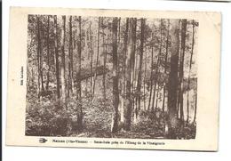NEXON Haute Vienne (vers 1930) Sous-Bois Près étang Vinaignerie - VENTE DIRECTE X - Autres Communes