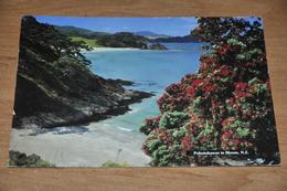 11366-  POHUTUKAWAS IN BLOOM - New Zealand