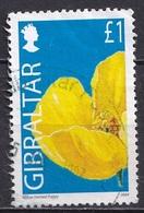 Gibraltar 2004 -  Wild Flowers - Gibraltar