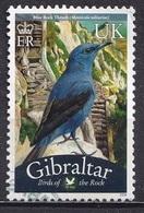 Gibraltar 2008 -  Birds - Gibraltar