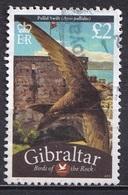 Gibraltar 2010 - Fauna - Birds - Gibraltar