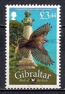 Gibraltar 2012 - Fauna - Birds Of The Rock - Gibraltar