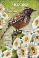 CACTUS WREN / ARIZONA / USA - Vögel