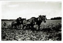 SARREBOURG 57  PHOTOGRAPHIE ORIGINALE Labourage En Lorraine 1932  TRES RARE CLICHE  ( Voir Verso ) VOIR SCANS - Plaatsen
