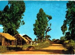 Afrique - Ethiopie - Wondo - Ethiopië