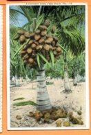 SPR710, Palmier, Noix De Coco, Coconut, Palm Beach, Non Circulée - Alberi