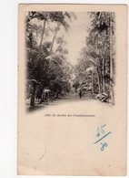 Ph3 - 3 - ILE MAURICE - MAURITIUS - Allée Du Jardin Des Pamplemousses - Maurice