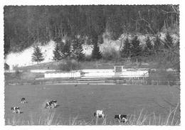Cpsm: 52 CHOIGNES LE HAUT (ar. Chaumont) Baignade Des Cheminots (Vaches) La Marne Touristique (Rare) - Autres Communes