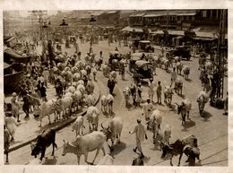 INDE INDIA  21*16CM Fonds Victor FORBIN 1864-1947 - Lieux