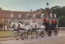 CPM - CHEVAL - HARAS Du PIN - Attelage D'étalons Percheron - Edition Combier - Chevaux
