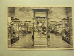 31790 - TERVUREN - MUSEUM VAN BELGISCH CONGO - VOGELENZAAL - ZIE 2 FOTO'S - Tervuren