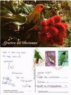 CPM SURINAME-Conurus Solstitialis Met Bixa Orellana (330226) - Surinam