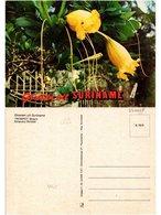 CPM SURINAME-Trompet Bloem (330228) - Surinam