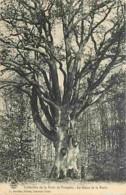 03 - Forêt De Tronçais - Le Géant De La Forêt - Arbre Remarquable - Voir Scans Recto-Verso - Frankreich