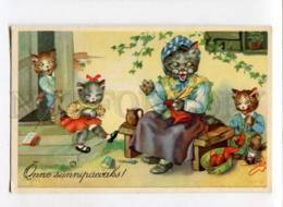 3075346 Family Of DRESSED CATS Granny & KITTENS Vintage ColorPC - Dressed Animals