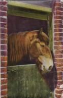 AR58 Animals - Horse Looking Over Stable Door - Horses