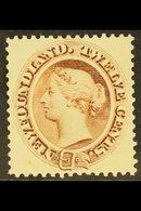 1894 12c Deep Brown, SG 61, Very Fine Mint. For More Images, Please Visit Http://www.sandafayre.com/itemdetails.aspx?s=6 - Newfoundland And Labrador