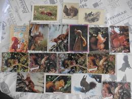 LOT DE  18   CARTES  POSTALES    D  ECUREUILS - 5 - 99 Cartes