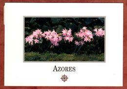 Azores (77752) - Açores