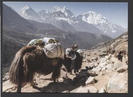 Tibet. - NOT  Used - See The 2 Scans For Condition.(Originalscan ) - World