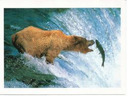Alaskan Brown Bear Reaching For A Salmon,Katmai National Park.Alaska, Postcard From North Pole Sent To Andorra 2019 - Ours