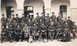 98Aa   Photo Officiers Et Sous Officiers Divers Régiments Et Chiens De Diverses Races - Personnages