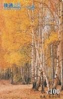 TARJETA TELEFONICA DE CHINA. ARBOLES, BOSQUE - TREES, FOREST. CRCYB2002. (731) - China